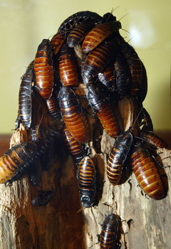 A group of cockroaches