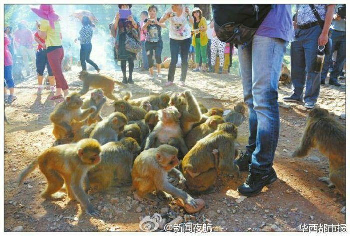 Macaques chinese village xianfeng overrun