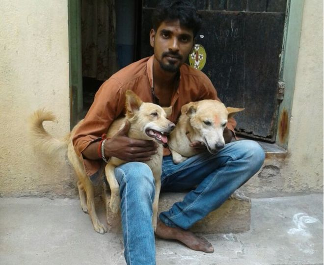 street dogs india capture stabbing murder suspect crime