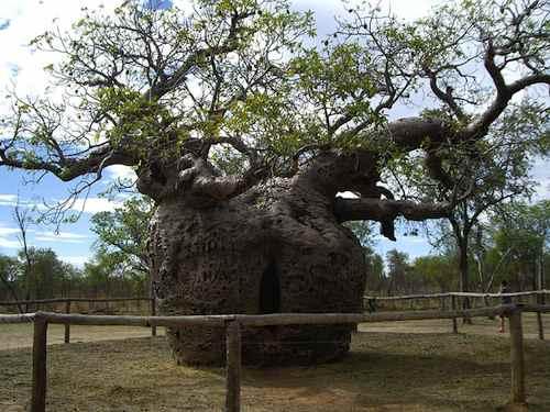 The Prison Tree. Weirdass