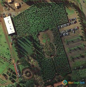 Farm Field Art