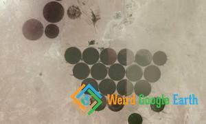 Green Circles in Qatar