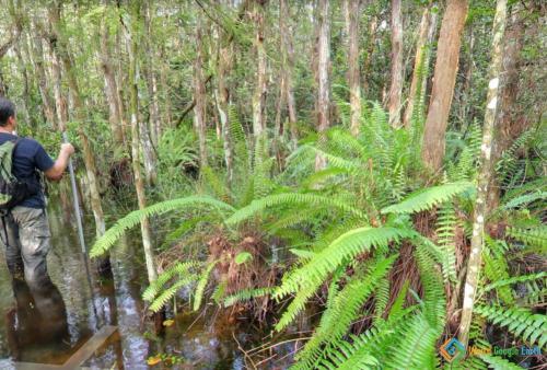 Wading Through the Florida Swamps, Ochopee, Florida, USA