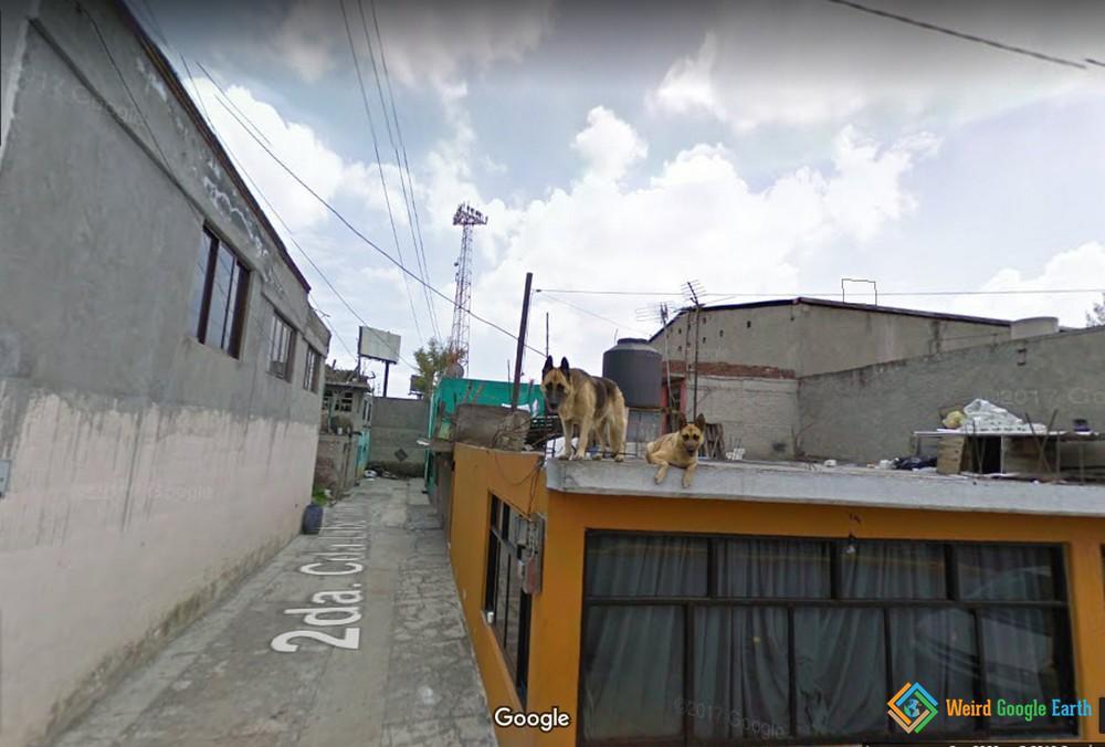 City of Dogs in Escapetec, Mexico