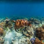 Norman Reef, The Great Barrier Reefs, Australia