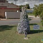Deer Horn Tree, Junction, Texas, USA
