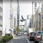 Dramatic Bird Photography, Tokyo, Japan