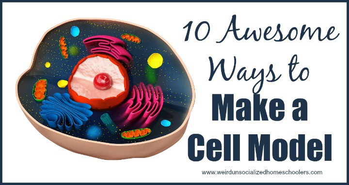 plant cell diagram project wiring for immersion heater 10 awesome ways to make a model - weird unsocialized homeschoolers