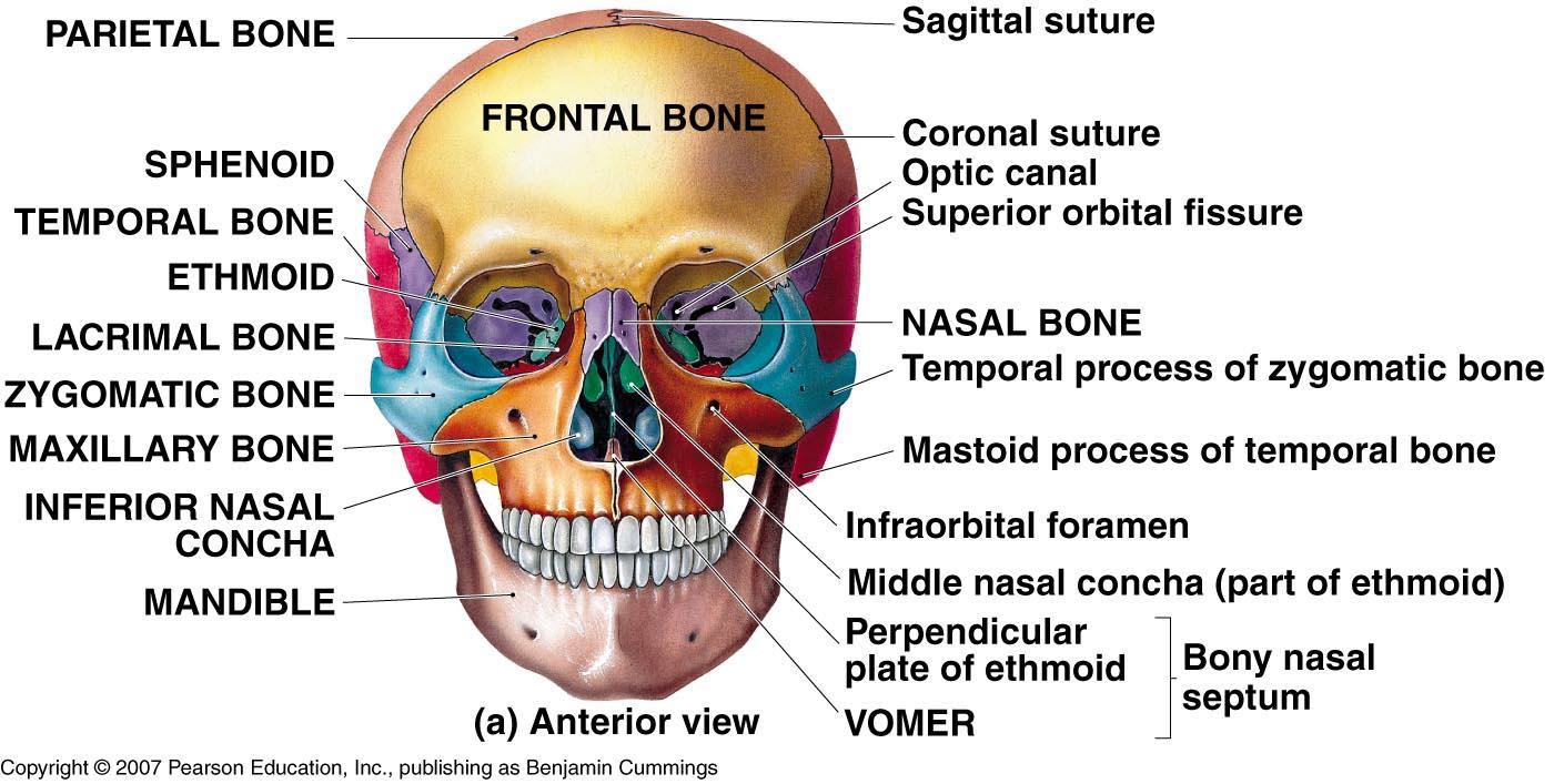 unlabeled skull diagram inferior view venn worksheet grade 4 here is a-p