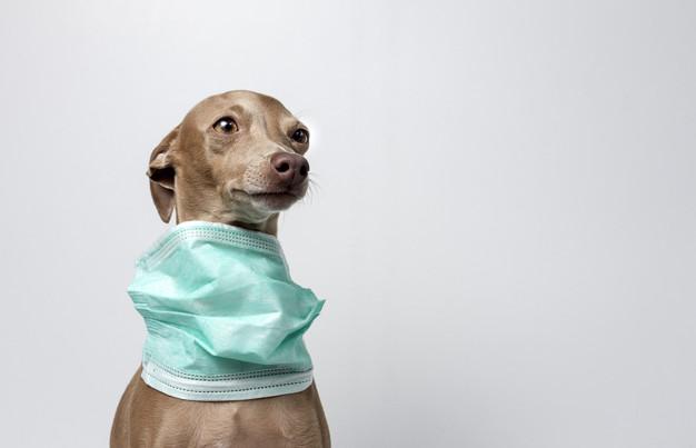 coronavirus-os-pets-oferecem-algum-risco-para-os-humanos