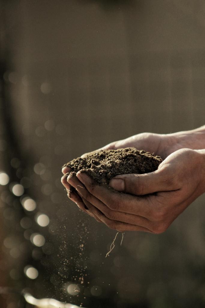 Soil in 2 hands