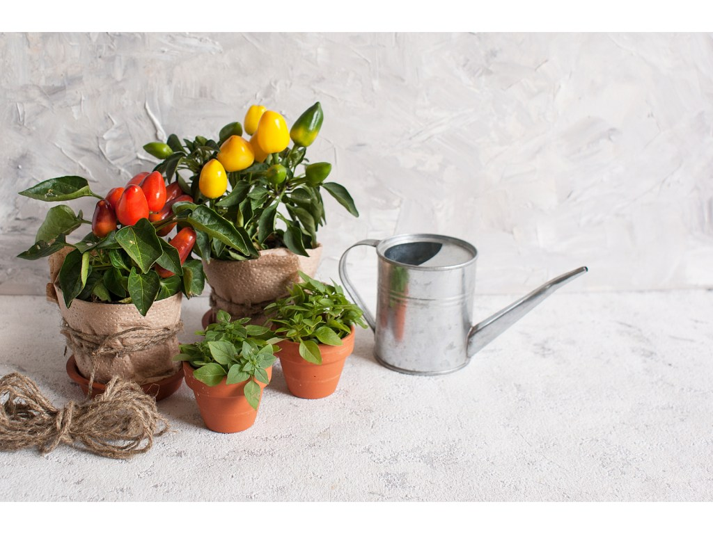 Plants in a pot and a watering can