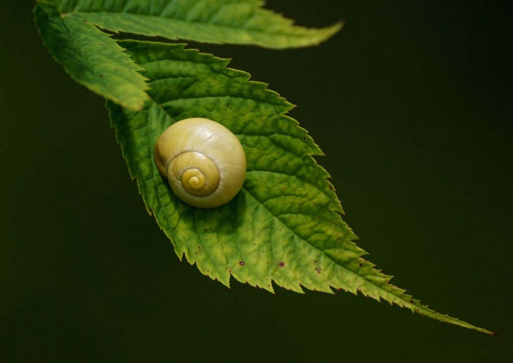 medium resolution of all about land snails
