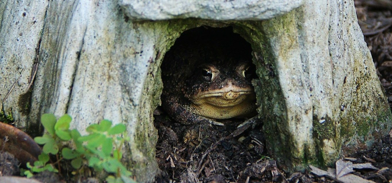 Make A Toad House Welcome Wildlife