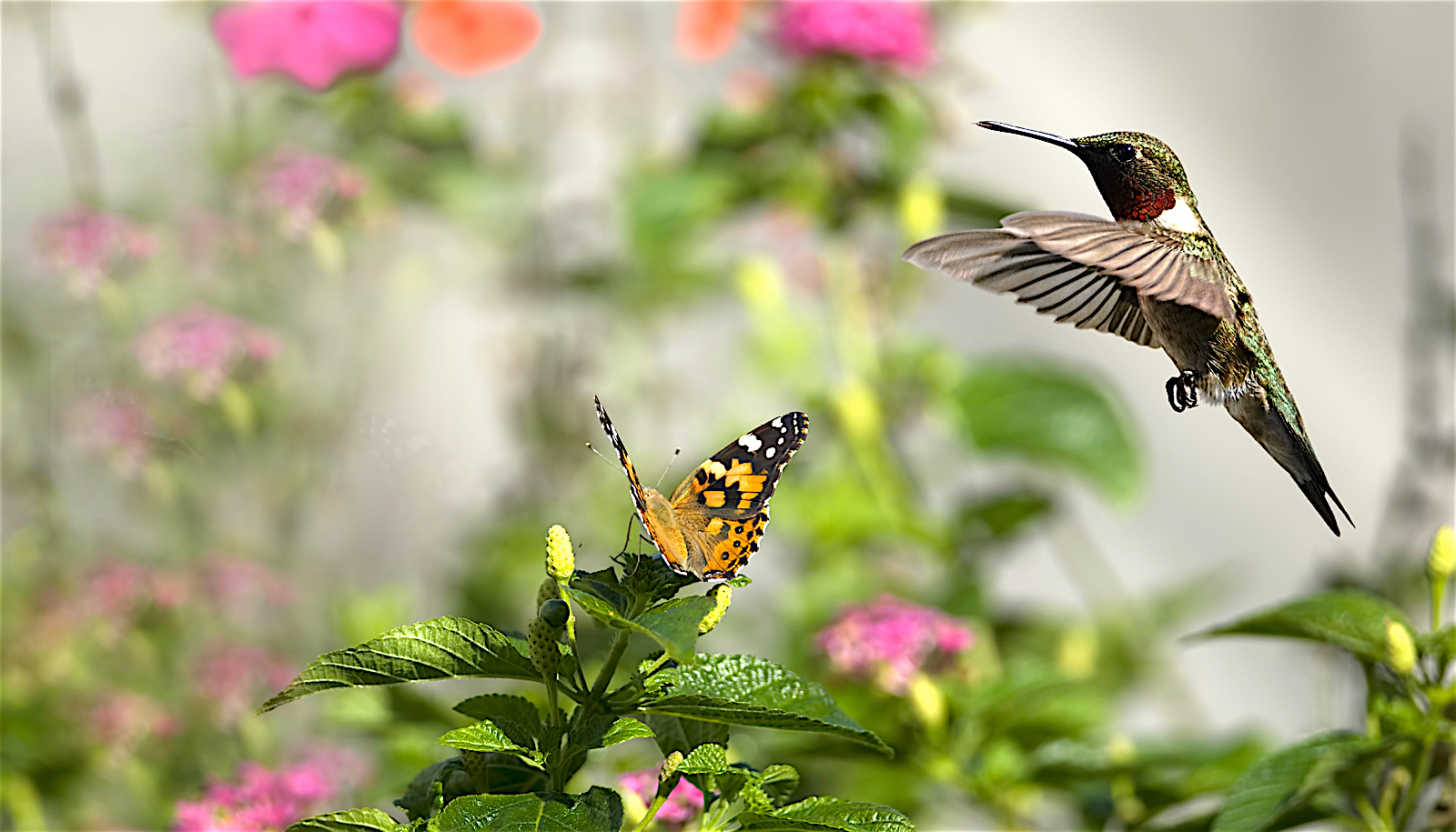Butterfly Garden Layout Design