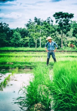 Professional Photographer Scott Lumley Takes a Field Trip to Rice Farming with We Learn Thai Chiang Mai 385