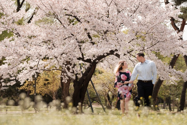 Cherry Blossoms are fickle and can be difficult to time, but if you're lucky, they're beautiful.