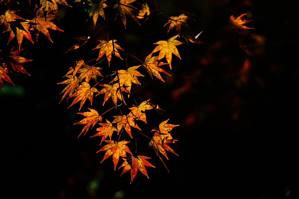 Autumn maple, Gangcheonsan National Park, Sunchang Gochujang Village for Smile Magazine, Korea Editorial Photographer