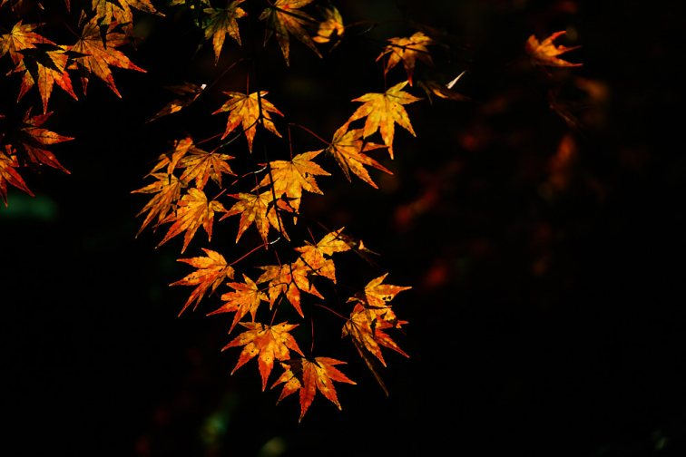Autumn maple, Gangcheonsan National Park, Sunchang Gochujang Village for Smile Magazine, Korea Editorial Photographer