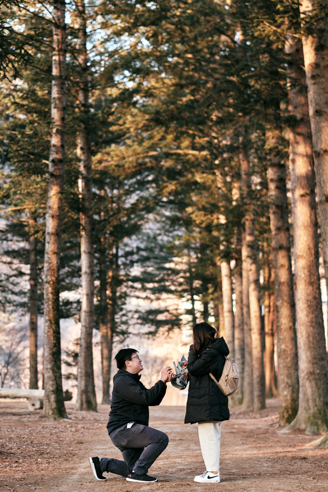 Joshua's Proposal to Care in the Pine Tree Avenue of Nami Island