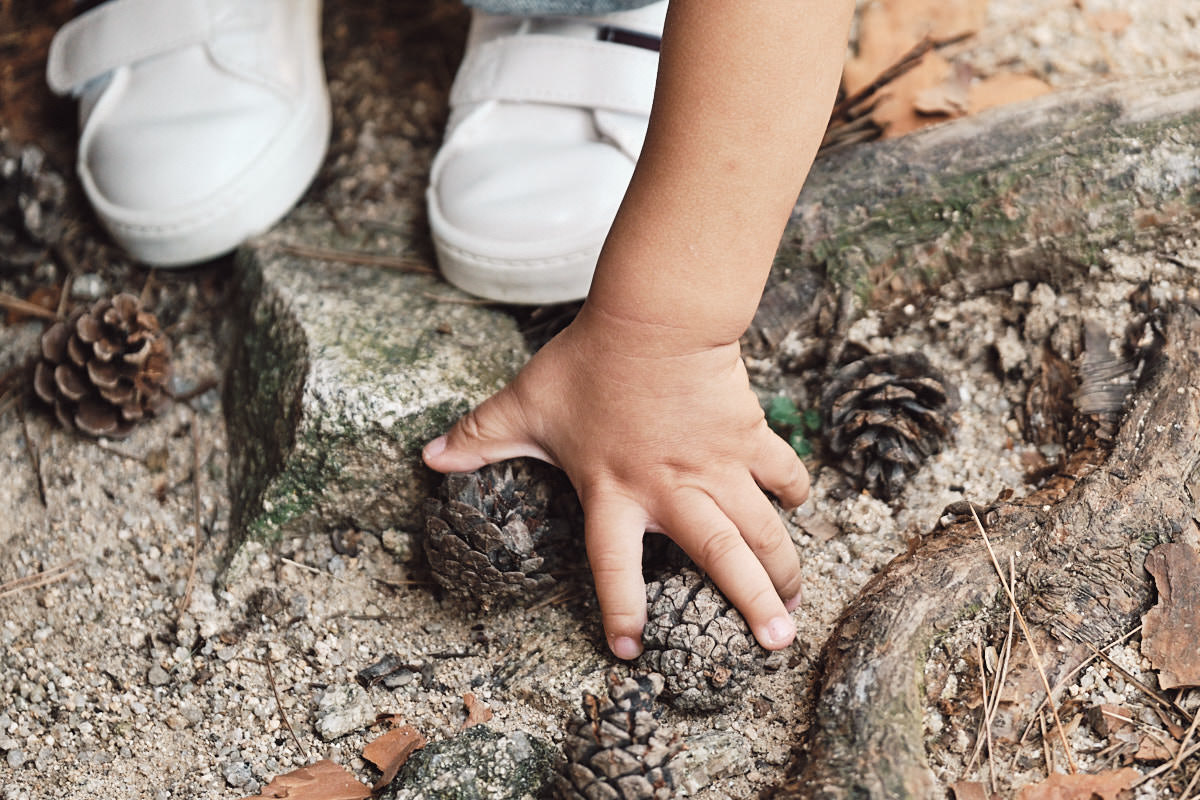 Grasping Pine Cones - Michas Post-Custody Family Photos