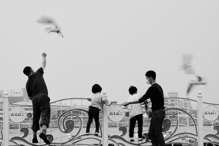 Seagulls - Ara Lock, Incheon
