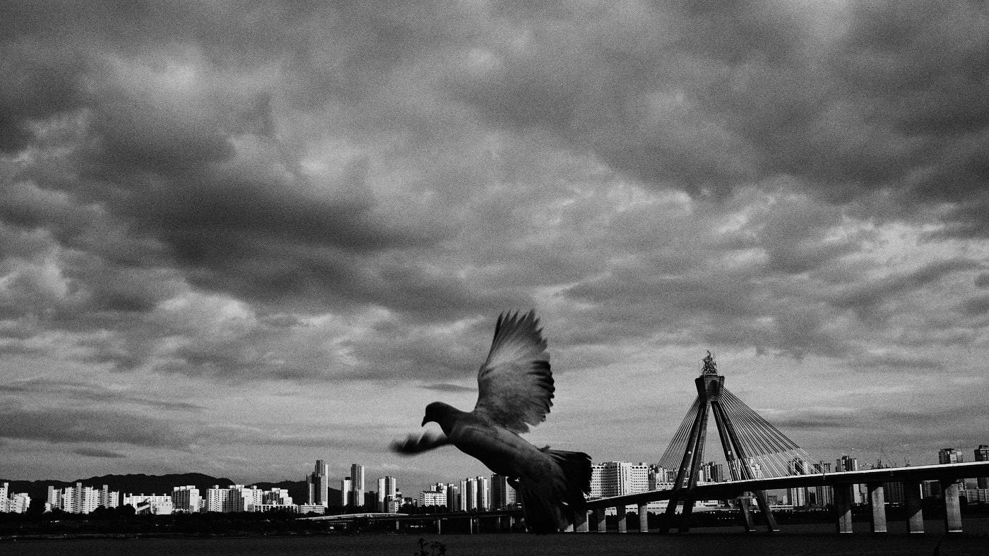Olympic Bridge and Bird
