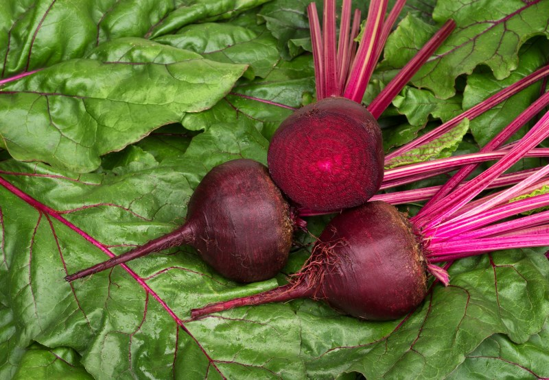 Image result for beets interesting color facts