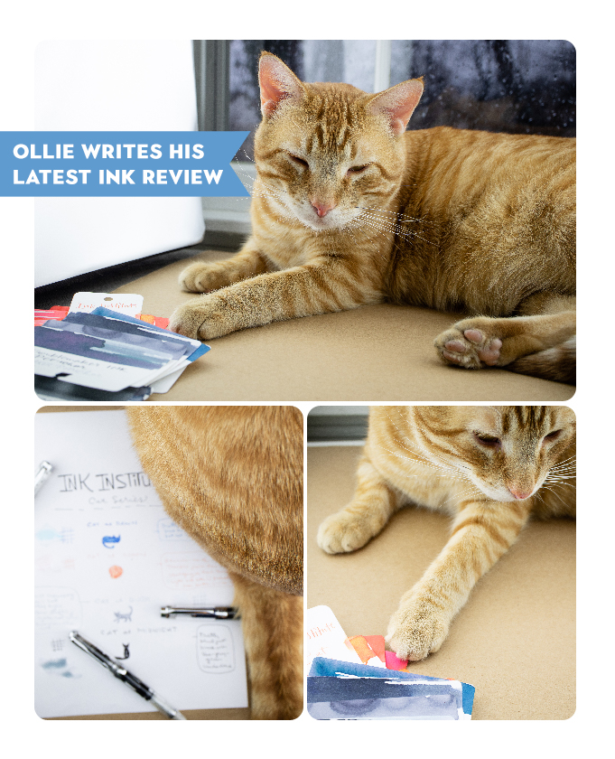 Ollie ink review
