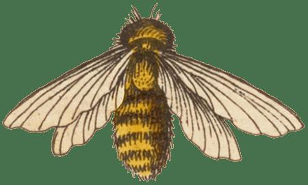Jesi: The Bee Planner