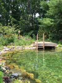 Safe and Sustainable Backyard Pools | Well Being Magazine