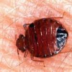 The Simple Bedbug Treatments