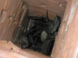 birds in chimney
