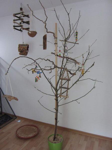 Der Welli Baum  WellensittichBlog Wellinet  Fr alle die Wellensittiche lieben