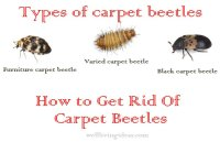 15 Effective Do It Yourself Ways To Get Rid Of Carpet Beetles