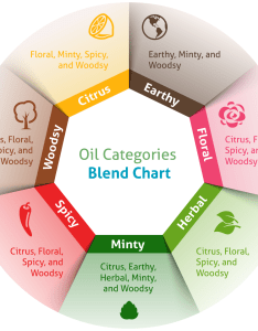 Discover the essential oil categories that blend well together oils chart also how to group and mix create your wellness rh wellnessaromas