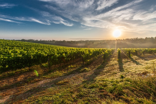 Farm Land during Sunrise