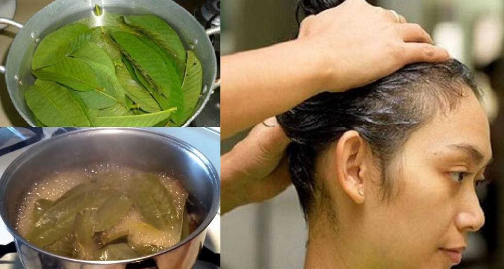 Heres How To Use Guava Leaves To Stop Hair Loss