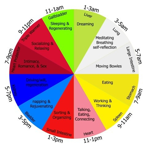 Normal Sleep Cycle Diagram Body Clock Wellpoint Acupuncture North Finchley London