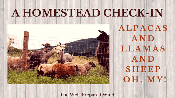 A Homestead Check-In