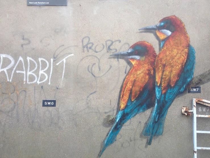 kingfisher2-wellststudio