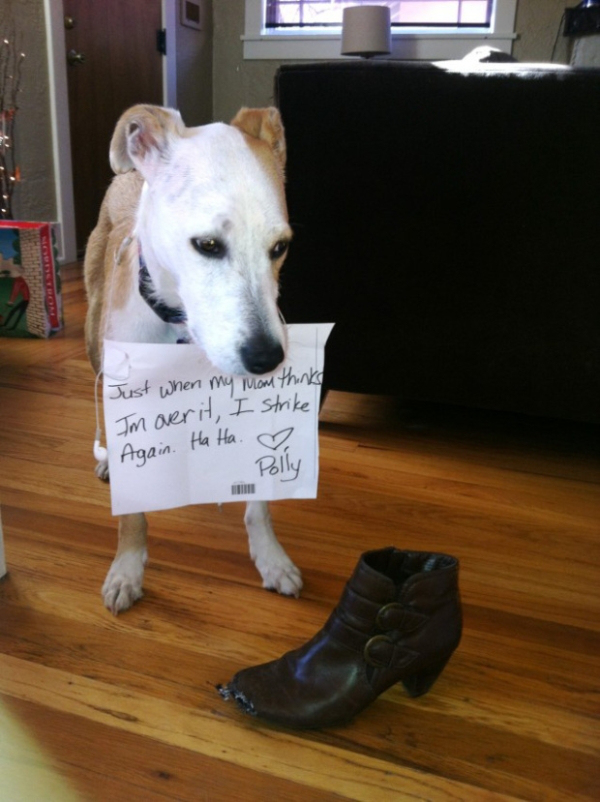 All New Dog Shaming Photos That You Wont Be Able To Stop