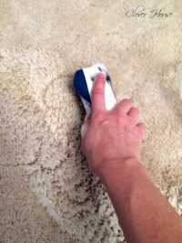 Remove Pet Stains From Carpet For Good By Making This