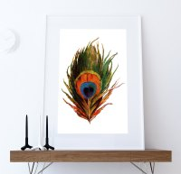 Vintage Peacock Feather Print Prints illustrated bird ...