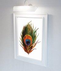 Vintage Peacock Feather Print Prints illustrated bird ...