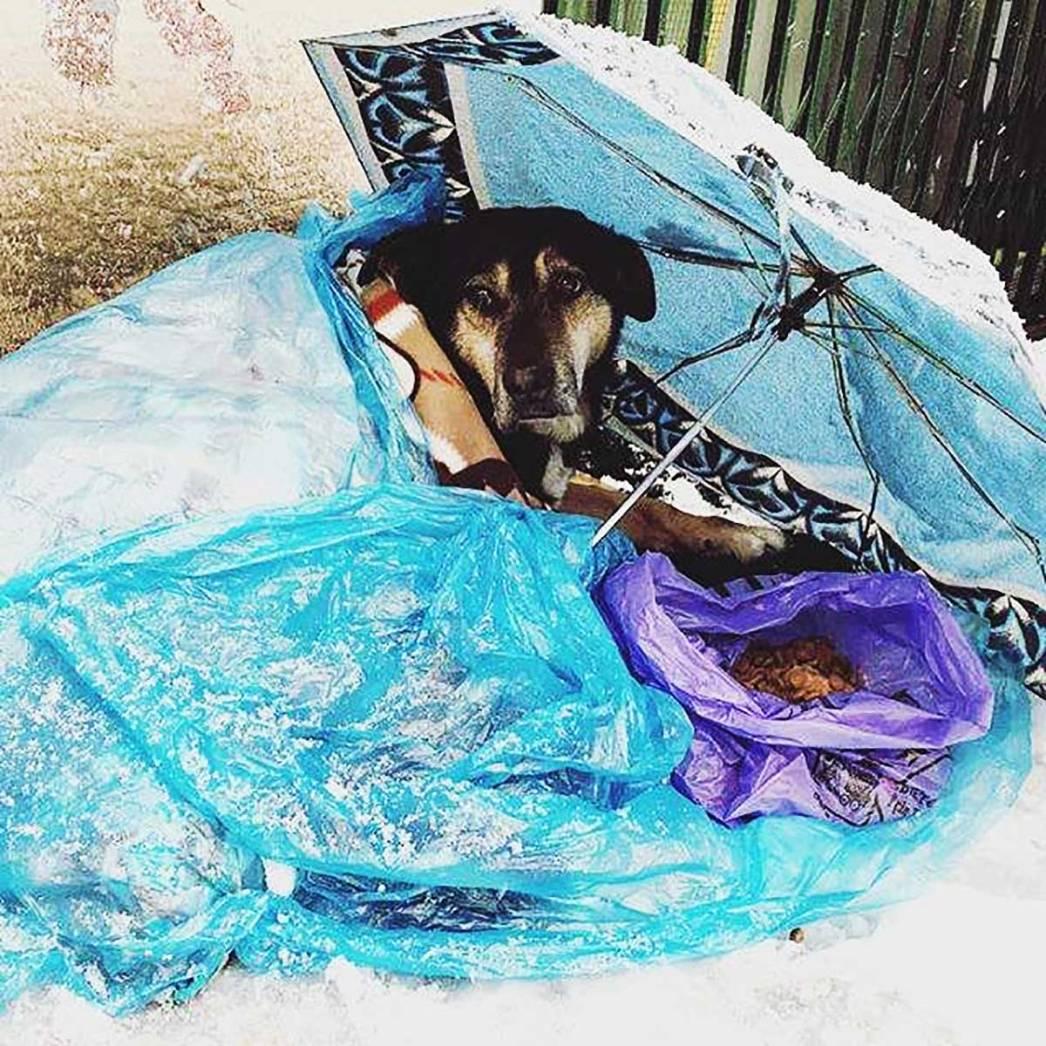 Umbrella Stray Dog Snow Istanbul