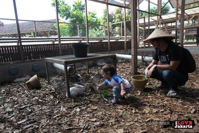 Feeding rabbits at Kuntum Bogor_Quantum Nursery Bogor_Kuntum Farmfield Bogor_Tasha May_welovejakarta_we love jakarta_jakarta with kids_kids in indonesia_what to do with kids on the weekend in jakarta