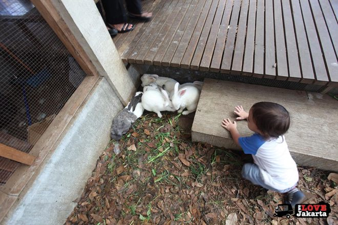Rabbits at Kuntum Bogor_Quantum Nursery Bogor_Kuntum Farmfield Bogor_Tasha May_welovejakarta_we love jakarta_jakarta with kids_kids in indonesia_what to do with kids on the weekend in jakarta