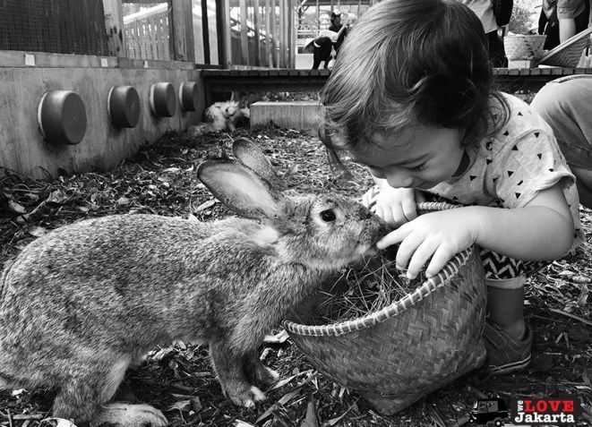 Tasha May_We love jakarta_Kuntum Nurseries_rabbits being fed