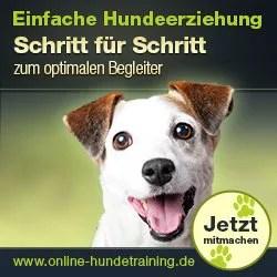 Online Hundeschule Test 2018